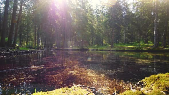 Thumbnail for A View of the Forest From the River