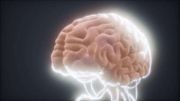 Thumbnail for Animated Model of Human Brain