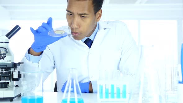 Thumbnail for Scientist Looking Reaction in Microscope and Watch Glass