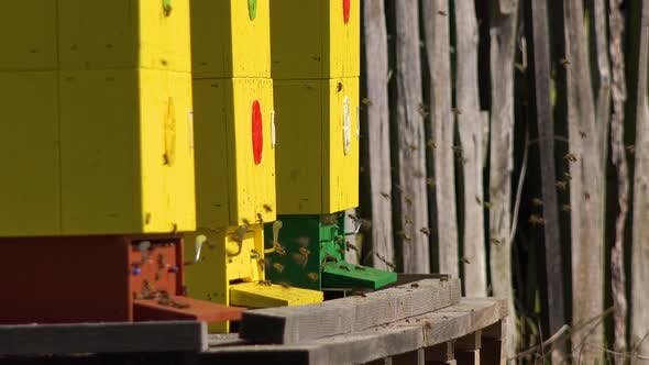 Thumbnail for A Close Up View of Three Yellow Bee Hives, Bees Fly in and Out