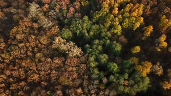 Cover Image for Aerial Top View of Autumn Trees in Forest Background, Caucasus, Russia. Coniferous and Deciduous