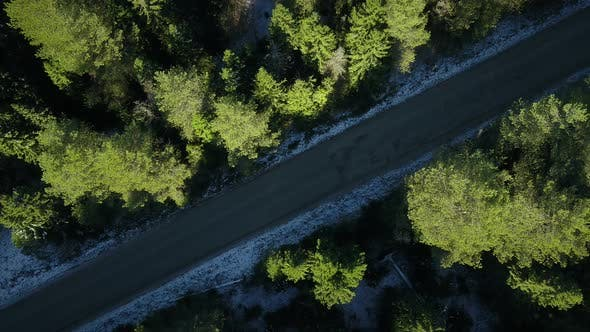 Thumbnail for A Flight Over the Road Throught the Forest