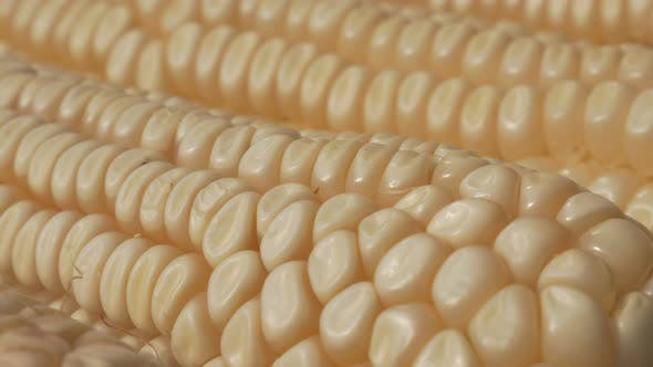 Thumbnail for Ear of maize in with row of seeds slow tilting 4K 2160p 30fps UltraHD footage - White seed kernels o