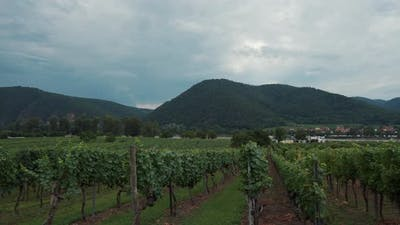 Landscape with Vineyards in Wachau Valley Austria