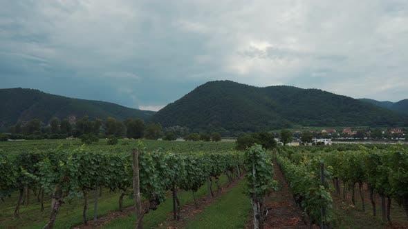 Landschaft mit Weinbergen im Wachautal Österreich