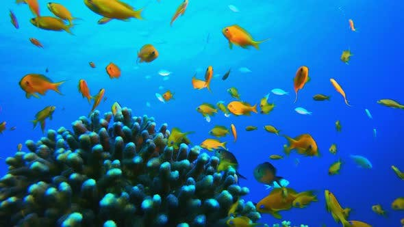 Thumbnail for Underwater Colourful Scenery