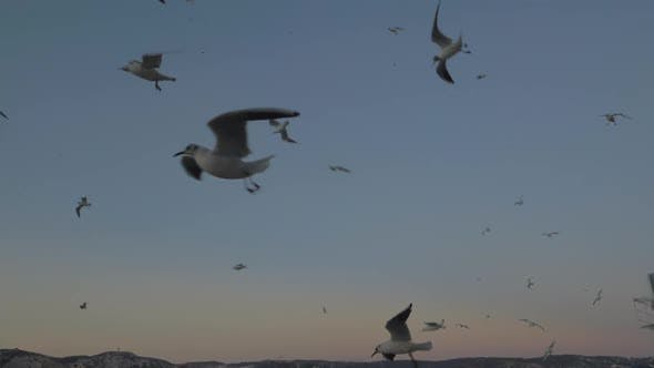 Thumbnail for Lazy Floating Seagulls
