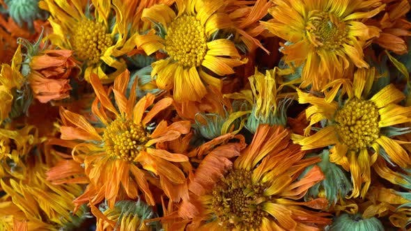 Thumbnail for Rotation Calendula Herbal