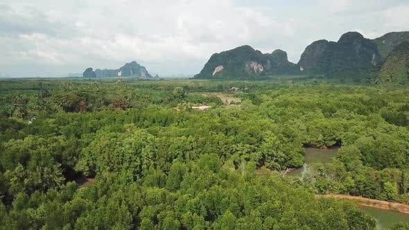 Cover Image for Aerial of River in Mangrove Forest and Mountains