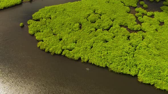 Cover Image for Rainforest and Green Trees on the Island From a Bird's Eye View in Siargao, Philippines