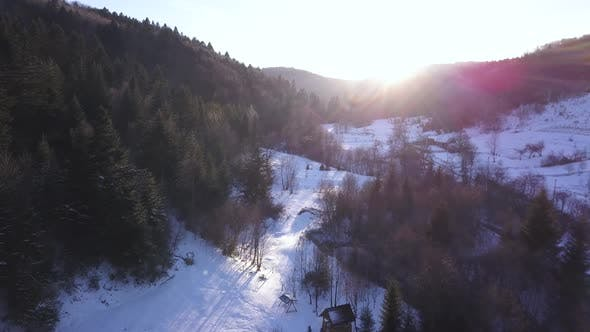 Thumbnail for Aerial View of a Snowy Forest with High Pines and Houses Underneath at Sunrise
