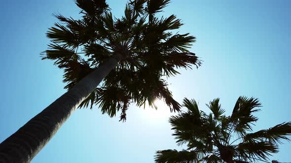 Thumbnail for Panning Under Palm Trees