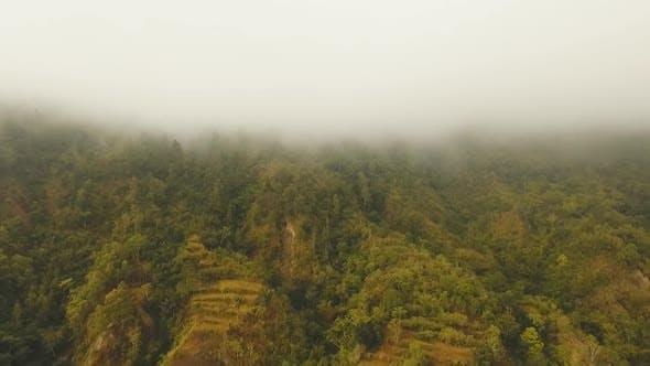 Rainforest in Cloud BaliIndonesia