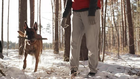 Thumbnail for Dog Bringing Stick to Female Owner