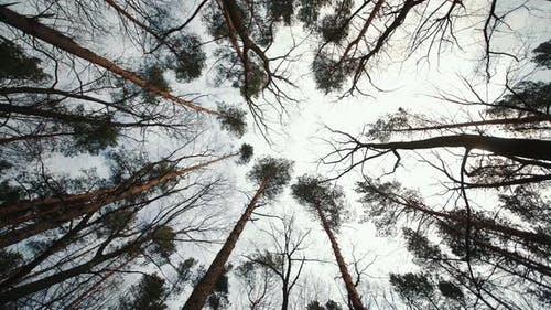 Top View of Trees Without Leaves