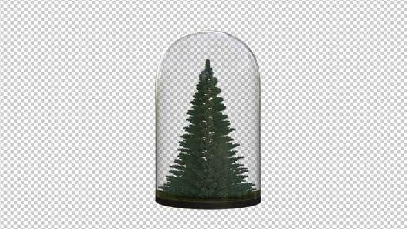 Growing Pine Tree In The Glass Lantern