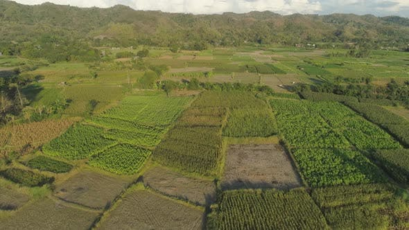 Thumbnail for Landscape with Rice Terrace Field Philippines, Luzon