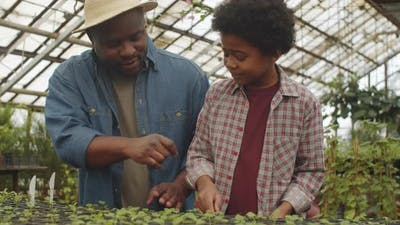 Afro-American Father and Son Working in Greenhouse Farm