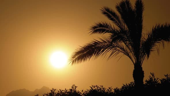 Thumbnail for Palm Tree at Sunset. Silhouette of Exotic Palm Tree on a Background of Sun and Mountains