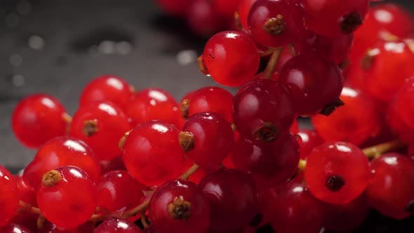 Thumbnail for Red Currants Berry in Studio Macro Close Up Shot, Fresh Garden Berries Redcurrants