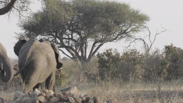 Elephants Wandering Around Waterhole