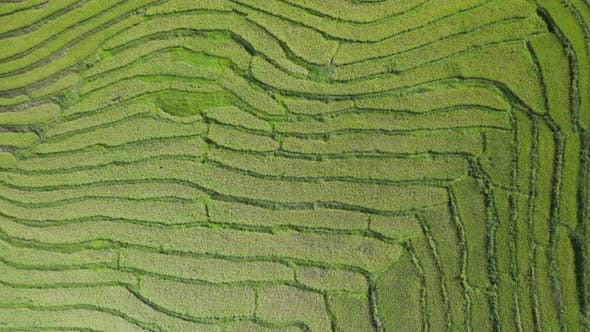 Birds eye view of rice terraces