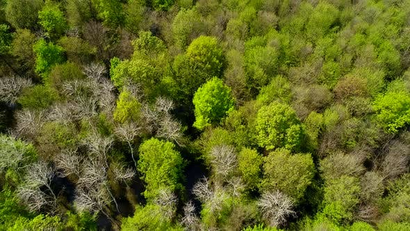 Thumbnail for Aerial Green Tree Fly Over View Of Forest