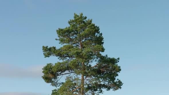 Thumbnail for Spinning Tree Hyperlapse