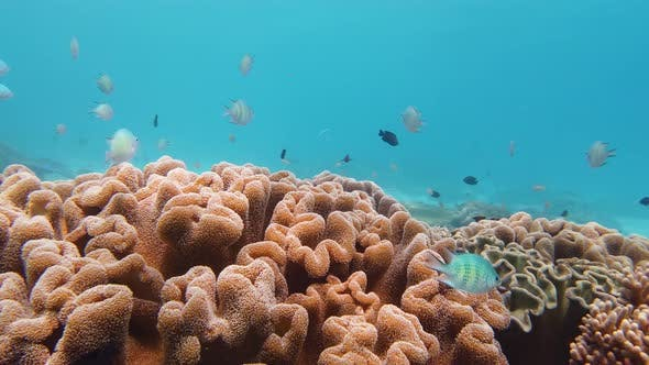 Thumbnail for Coral Reef and Tropical Fish Underwater, Leyte, Philippines