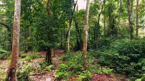 Deep Primeval Tropical Wild Rainforest Jungle Biosphere Forward Track