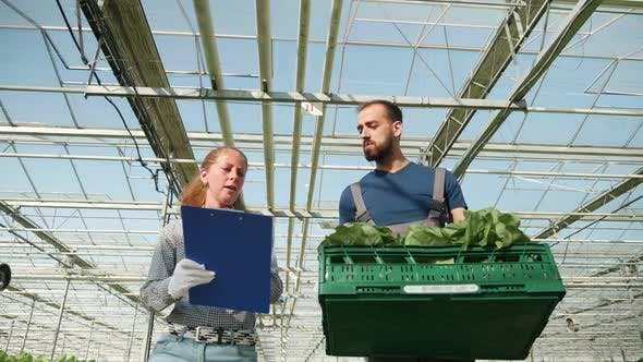 Cover Image for Team of Farmers Talking About Growing Organic Their Green Salad