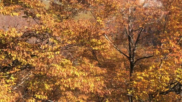 Thumbnail for Autumn Forest Aerial