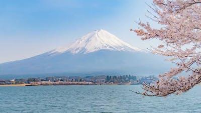 Japan Sakura Season