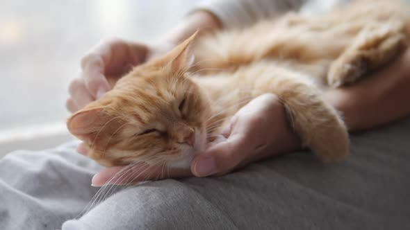 Thumbnail for Woman Is Stroking Cute Ginger Cat on Windowsill. Fluffy Pet Purring with Pleasure. Cozy Home