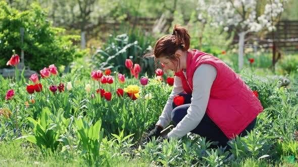 Frau arbeitet im Blumengarten