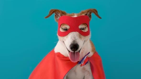 Dog Super Hero Costume