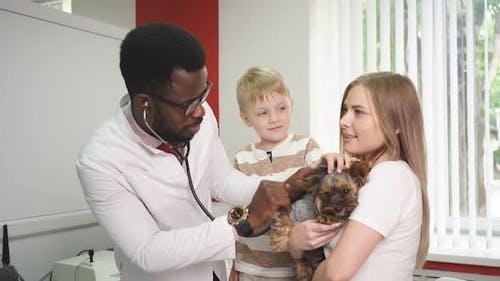 Vet Examining Dog in Animal Clinic