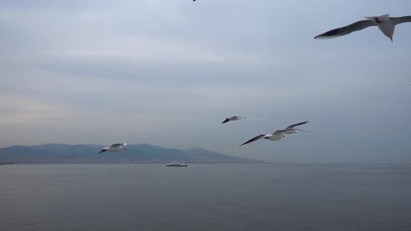 Seagulls Flying In The Gray Clean Sky. Close Up Flock Of Birds Flies Slow Motion. 11