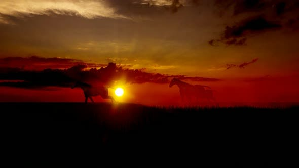 Herd of Horses Running in the Sunset