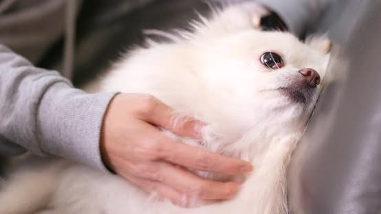 Thumbnail for Woman doing massage on her dog