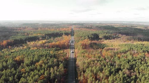Cars are driving through forest