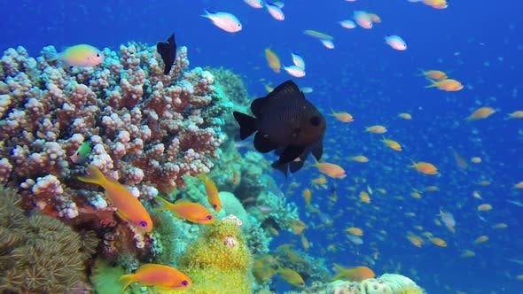 Thumbnail for Tropical Colorful Underwater Scene