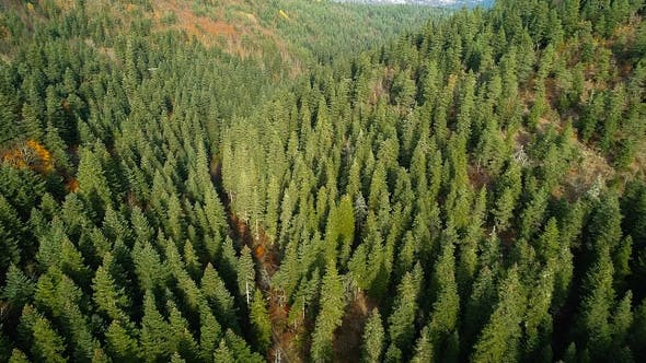 Thumbnail for Aerial View Of Woods With Trees