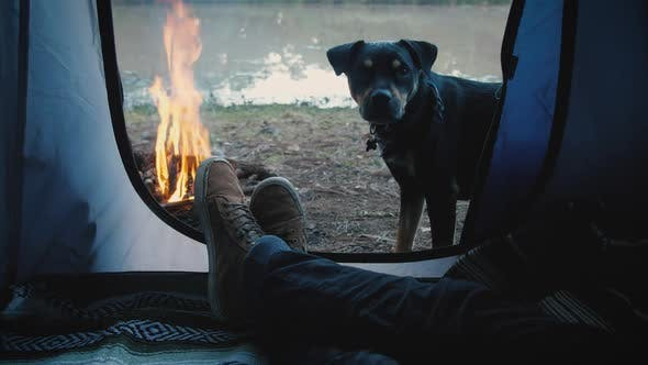 Thumbnail for Person Inside A Tent With Dog
