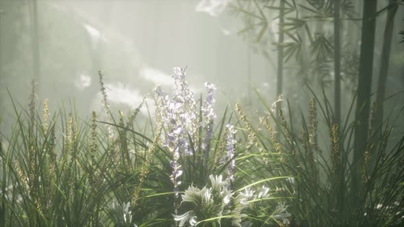 Grass Flower Field with Soft Sunlight for Background