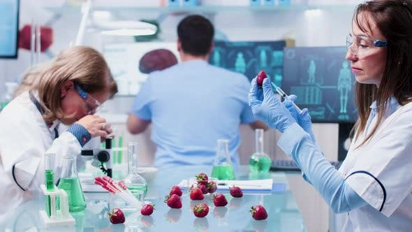 Thumbnail for Scientist Injecting a Strawberry with GMO
