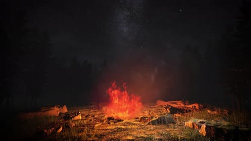 Night Forest Campfire 4K 01