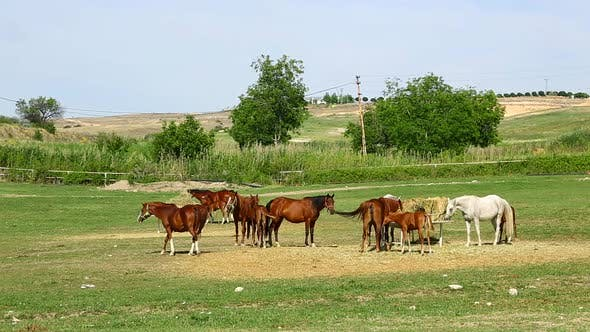 Cover Image for Horse Farm