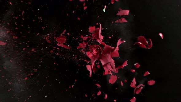Red rose flower exploding in super slow motion, shot with Phantom Flex 4K
