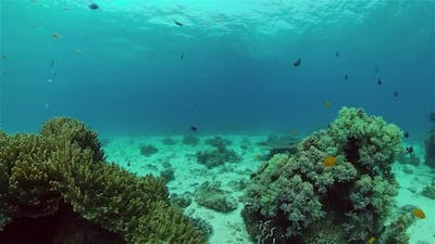 Coral Reef with Fish Underwater